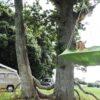 Viseči šotor Lullio CACOON Leaf Green3